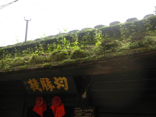 Grass_on_the_roof
