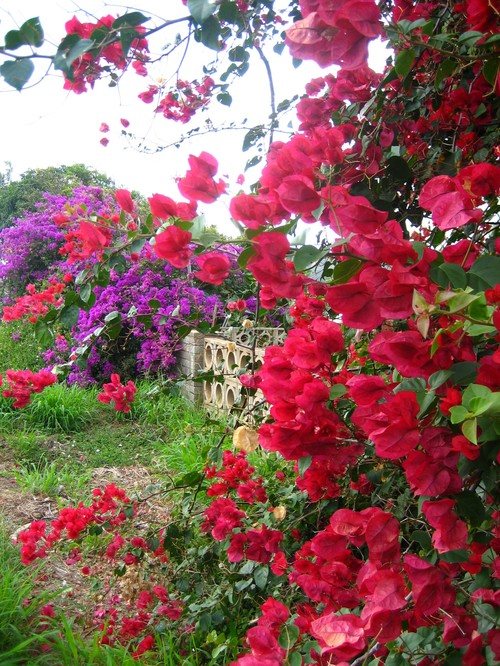 Flower_close