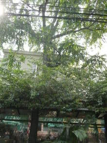 Cafe_outside